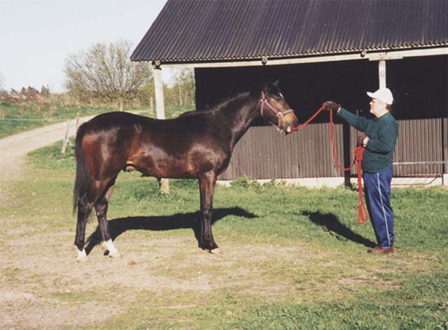 AMARILDO, yearling, with his owner and breeder Luiz Eduardo Lages, in the Baependi Stud, in Vedum, Sweden
