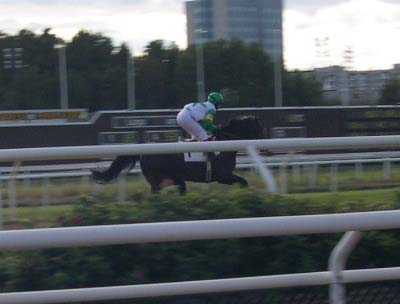 Amarildo in the canter in Täby Racecourse, Stockholm, Sweden