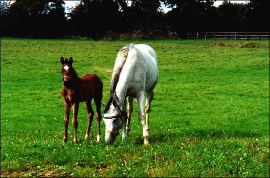 AMARILDO (1 month old) and IMPORTED GIRL in the stud