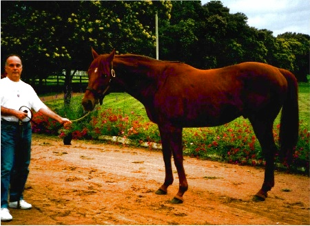 LUIZ EDUARDO LAGES with FALCON JET in the Haras Santa Ana do Rio Grande